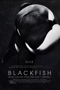 Cartaz: Blackfish - Fúria Animal